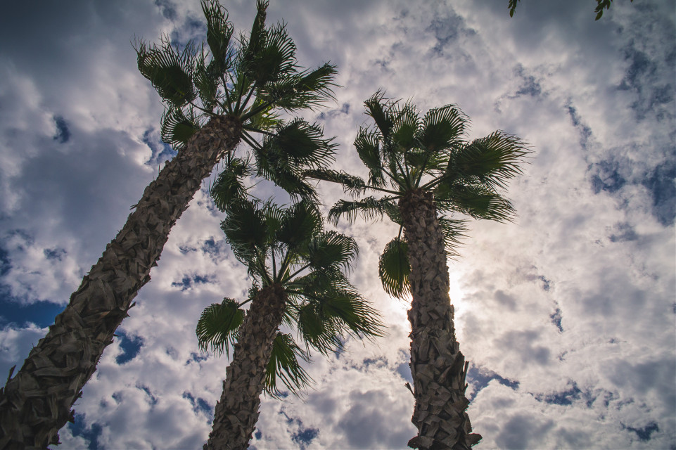 #hdrphotography #hdr #sky #clouds #nature #palmtrees