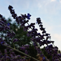 freetoedit flowers hdr sunset