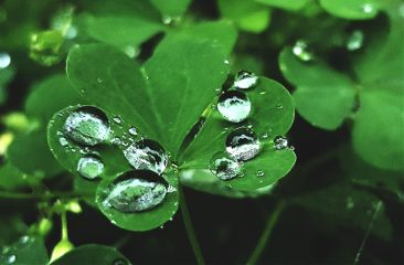 freetoedit mypic today clover raindrops