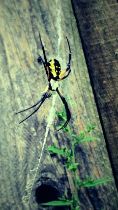 freetoedit mypic today what spider