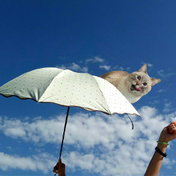 freetoedit cat umbrella umbrellaremix