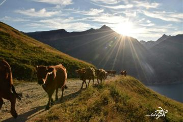 mountains sun countryside cows emotions