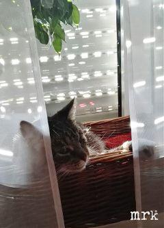 freetoedit morning petsandanimals cat sunlight