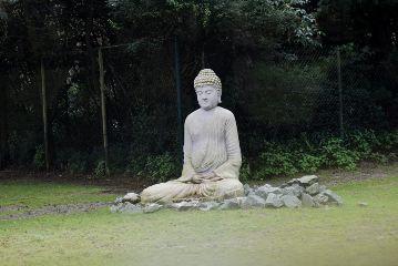 freetoedit nikond5300 unedited photography buddha