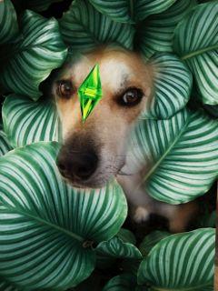 dailysticker dailystickerremix dog green diamond freetoedit