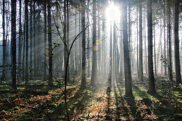 freetoedit nature remixit forest mist