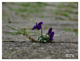 freetoedit flower summer violet bricks