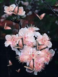 myoriginalphoto blossom spring magiceffect butterfly freetoedit