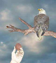 freetoedit dailystickerremix contoureffect eagle branch