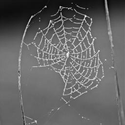 freetoedit cobweb spiderweb blackandwhite naturebeauty