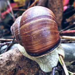 naturephotography petsandanimals snail september2017 autumnvibes