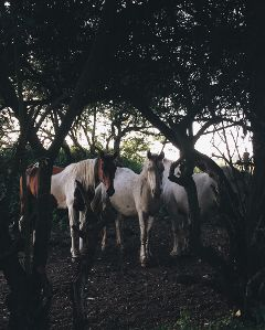 freetoedit horse horses forest nature