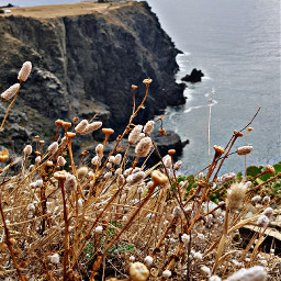 cerbere seaside lighthouse therocks
