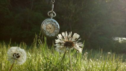 pocket dandelion summer steampunk