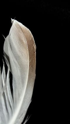 freetoedit simple contrast feather photography