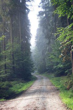 freetoedit forest fog