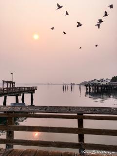 smoke sun sunrise pinksky haze dpcsunshine