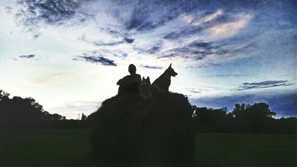 haystack sunset nature dogs me freetoedit