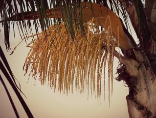 nature sunsettime endoftheday palmtree detail
