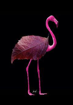 flamingo pinkflamingo leaves autumniscoming surreal