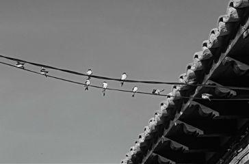 photography blackandwhite birds sky travel freetoedit