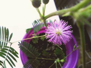 freetoedit plant flower bloom