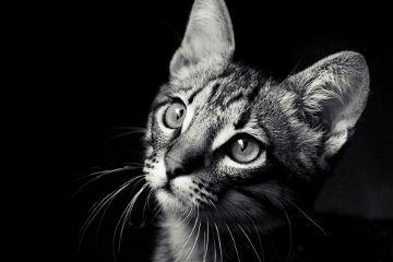 cat catlove