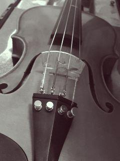 music violin instrument blackandwhite beauty freetoedit