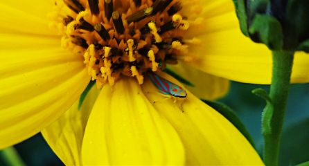freetoedit mypic today flower insect