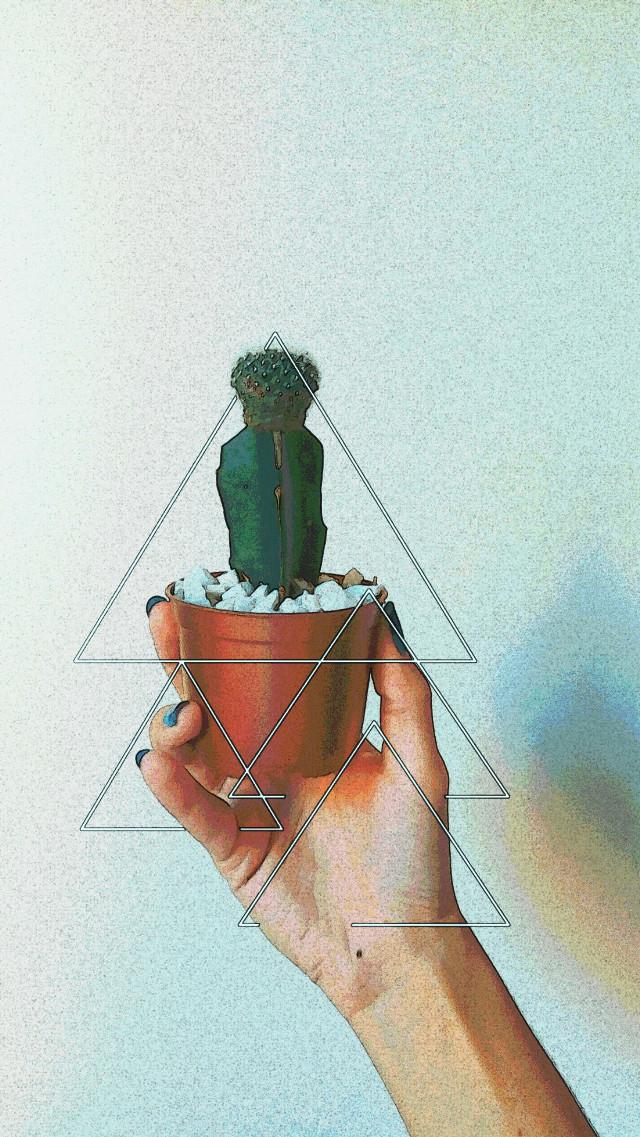 #cactus #triangle