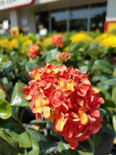 fallcolors blossom freetoedit