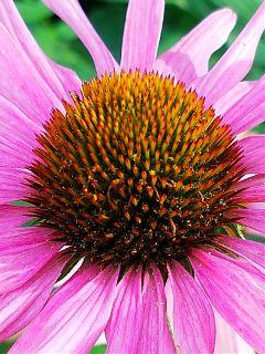 flower blossom nature naturephotography macro