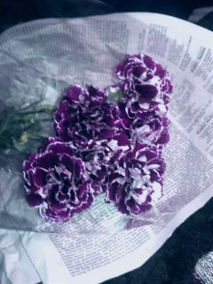 freetoedit carnations my edited
