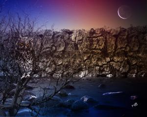 myedit nature night owl