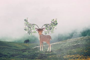 freetoedit deer animals fog green