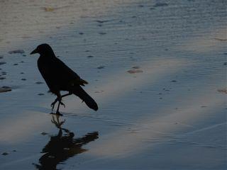bird beach september