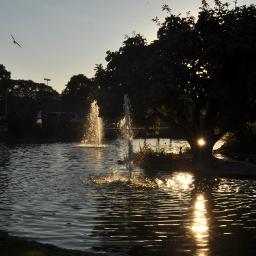 sunset birdinflight fountain pond photography