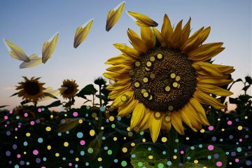 freetoedit madewithpicsart dailystickerremix dots sunflowers