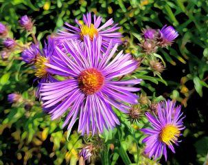 freetoedit beauty fallcolour lovelyweed