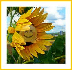 sunflower yellow happyweekendeveryone @csefi freetoedit