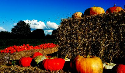 @csefi hdr pumpkin autumn colourful