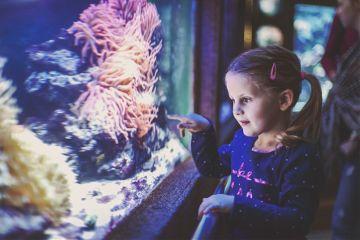 freetoedit aquarium colorful photography girl