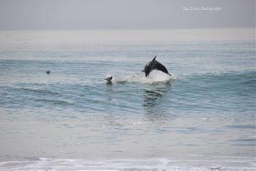 freetoedit dolphin sea mamals nature