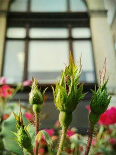 freshness rosebud architecture