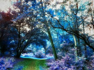 colorreplaceeffect fantasy forest fairytale surreal