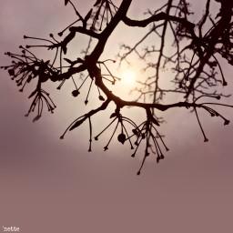 freetoedit eveninglight treesilhouette againstthesky settingsun