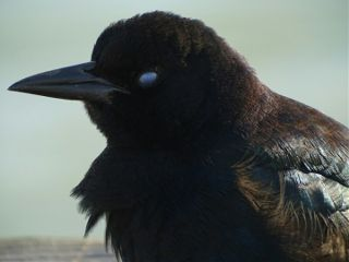 looks bird nicitating