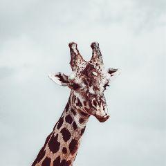freetoedit animal animals animalphotography zoo