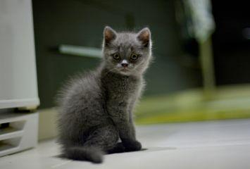 masha cat love