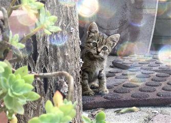 kitten catsofpicsart freetoedit